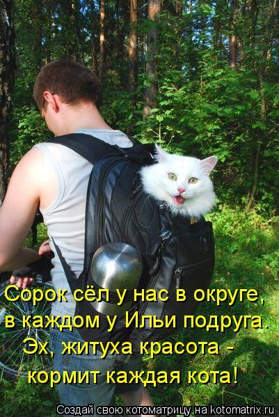 Котоматрица: Сорок сёл у нас в округе, в каждом у Ильи подруга. Эх, житуха красота - кормит каждая кота!