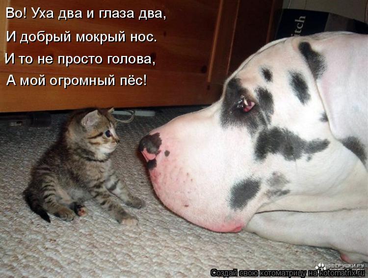 Котоматрица: Во! Уха два и глаза два, И добрый мокрый нос. И то не просто голова, А мой огромный пёс!