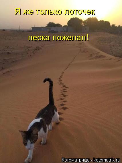 Котоматрица: Я же только лоточек песка пожелал!