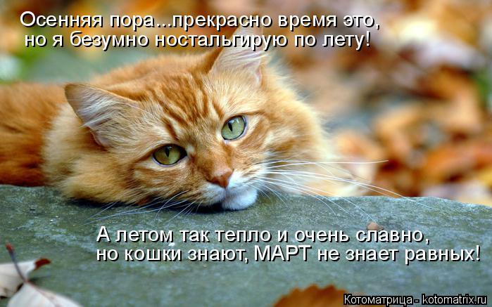 Котоматрица: Осенняя пора...прекрасно время это, но я безумно ностальгирую по лету! А летом так тепло и очень славно, но кошки знают, МАРТ не знает равных!