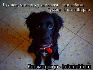 Котоматрица: Лучшее, что есть у человека, - это собака.  Туссен Никола Шарле