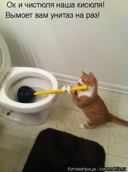 Котоматрица: Ох и чистюля наша кисюля! Вымоет вам унитаз на раз!