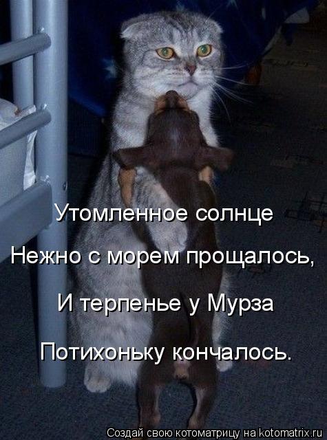 http://kotomatrix.ru/images/lolz/2014/09/25/kotomatritsa_0s.jpg