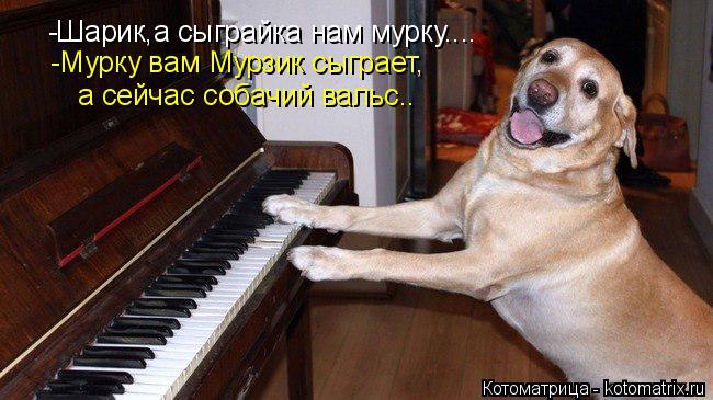 Котоматрица: -Шарик,а сыграйка нам мурку.... -Мурку вам Мурзик сыграет, а сейчас собачий вальс..