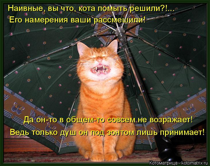 Котоматрица: Наивные, вы что, кота помыть решили?!... Его намерения ваши рассмешили! Да он-то в общем-то совсем не возражает! Ведь только душ он под зонтом л