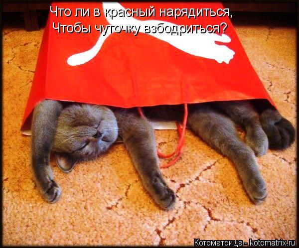 Котоматрица: Что ли в красный нарядиться, Чтобы чуточку взбодриться?