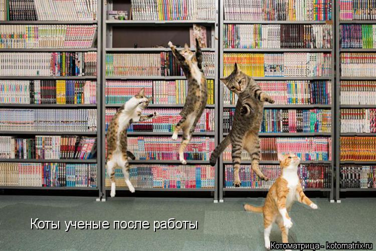 Котоматрица: Коты ученые после работы