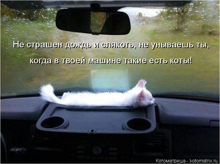 Котоматрица: Не страшен дождь и слякоть, не унываешь ты, когда в твоей машине такие есть коты!