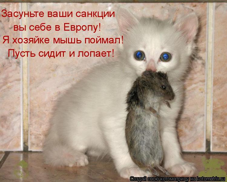 Котоматрица: Засуньте ваши санкции вы себе в Европу! Я хозяйке мышь поймал! Пусть сидит и лопает!