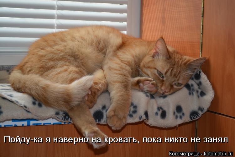 Котоматрица: Пойду-ка я наверно на кровать, пока никто не занял
