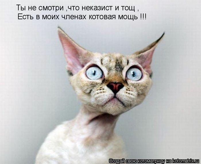 Котоматрица: Ты не смотри ,что неказист и тощ , Есть в моих членах котовая мощь !!!
