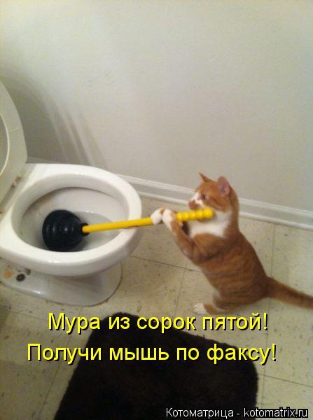 Котоматрица: Мура из сорок пятой! Получи мышь по факсу!