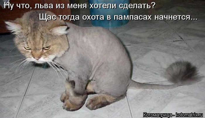 Котоматрица: Ну что, льва из меня хотели сделать? Щас тогда охота в пампасах начнется...
