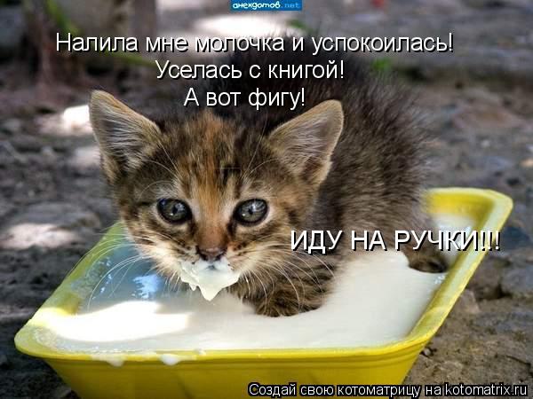 Котоматрица: Налила мне молочка и успокоилась! Уселась с книгой! А вот фигу! ИДУ НА РУЧКИ!!!