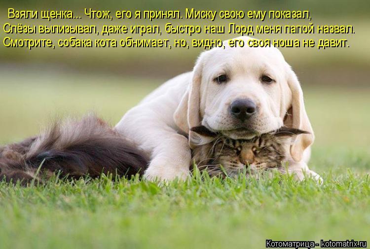 Котоматрица: Взяли щенка... Чтож, его я принял. Миску свою ему показал,  Слёзы вылизывал, даже играл, быстро наш Лорд меня папой назвал. Смотрите, собака кот