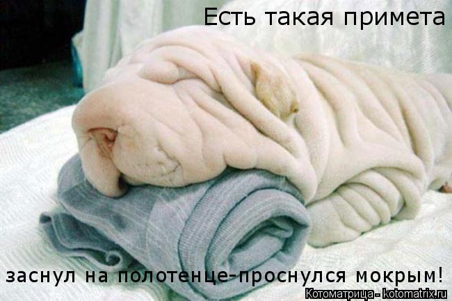 Котоматрица: Есть такая примета заснул на полотенце-проснулся мокрым!