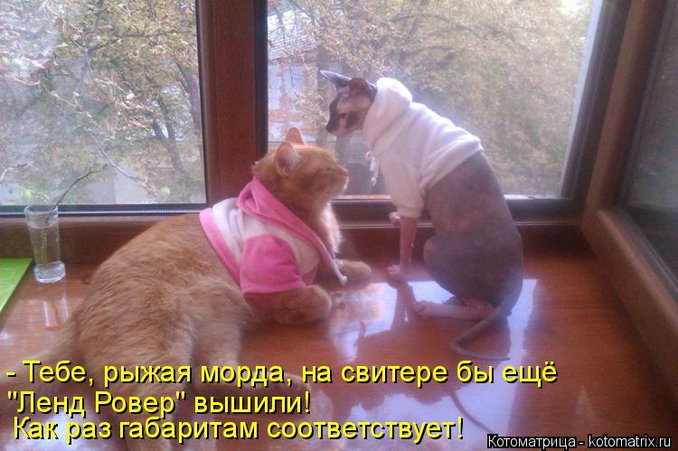 """Котоматрица: Как раз габаритам соответствует! """"Ленд Ровер"""" вышили! - Тебе, рыжая морда, на свитере бы ещё"""