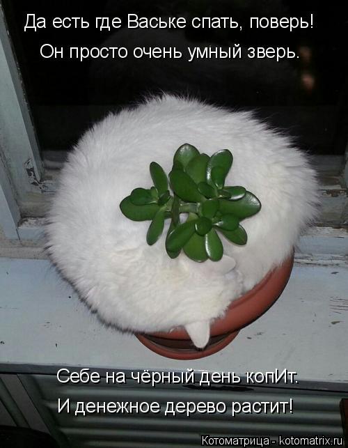 Котоматрица: Да есть где Ваське спать, поверь! Он просто очень умный зверь. Себе на чёрный день копИт. И денежное дерево растит!