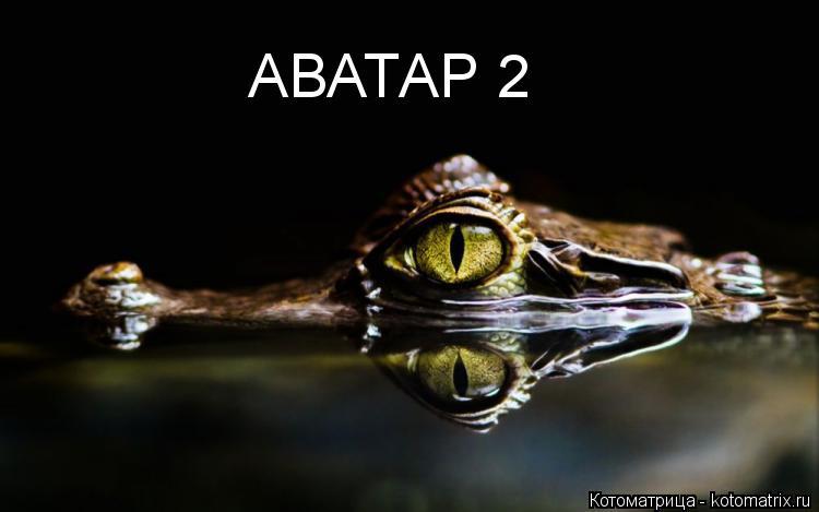 Котоматрица: АВАТАР 2