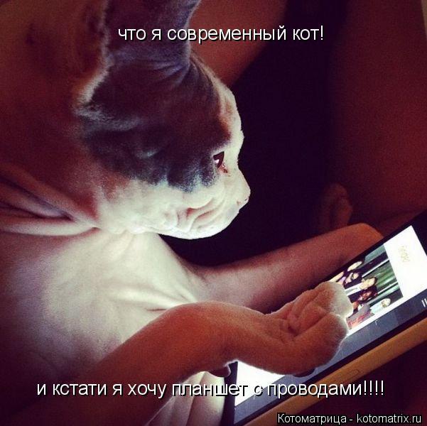 Котоматрица: что я современный кот! и кстати я хочу планшет с проводами!!!!