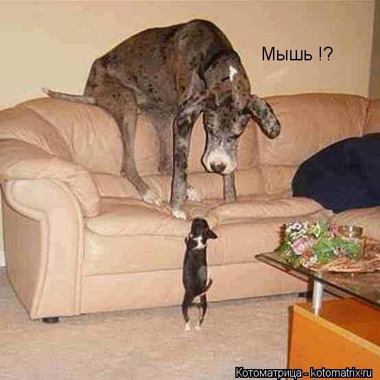 Котоматрица: Мышь !?