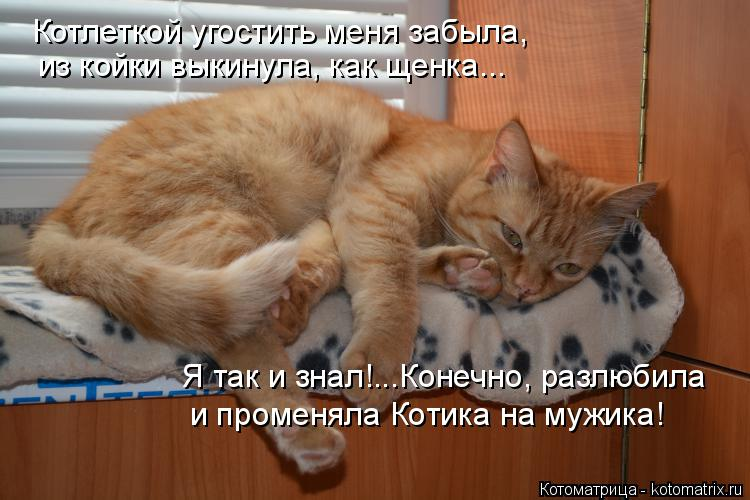 Котоматрица: Котлеткой угостить меня забыла, из койки выкинула, как щенка... Я так и знал!...Конечно, разлюбила и променяла Котика на мужика!