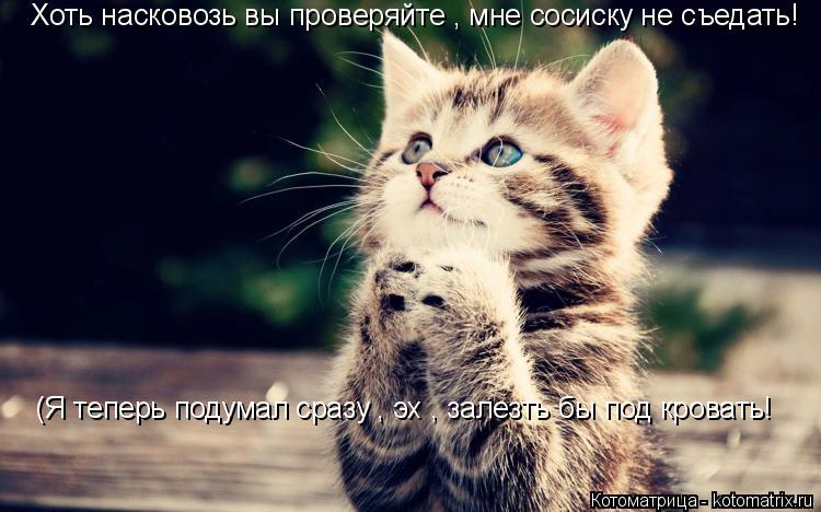Котоматрица: Хоть насковозь вы проверяйте , мне сосиску не съедать! (Я теперь подумал сразу , эх , залезть бы под кровать!
