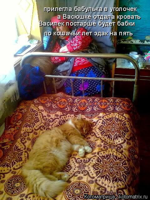 Котоматрица: прилегла бабулька в уголочек а Васюшке отдала кровать Василек постарше будет бабки по кошачьи лет эдак на пять