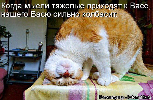 Котоматрица: Когда мысли тяжелые приходят к Васе, нашего Васю сильно колбасит.