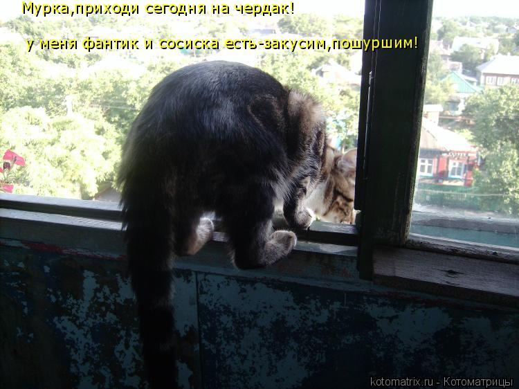 http://kotomatrix.ru/images/lolz/2014/09/28/kotomatritsa_Vm.jpg