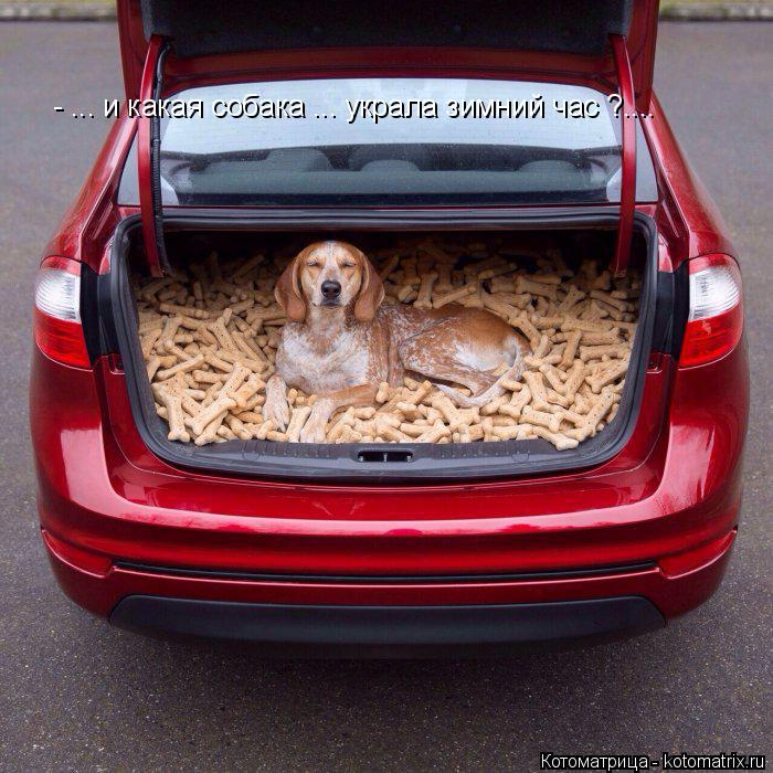 Котоматрица: - ... и какая собака ... украла зимний час ?....