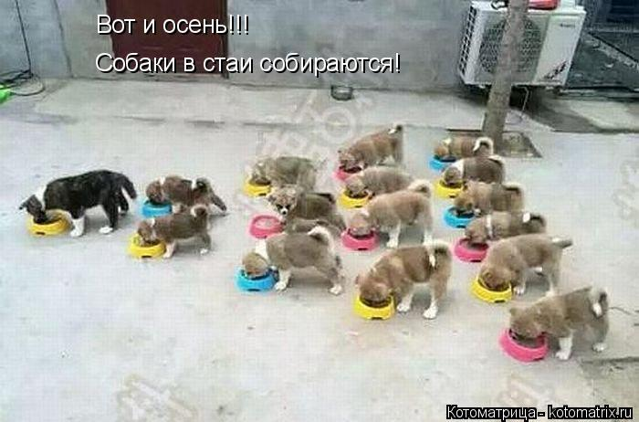 Котоматрица: Собаки в стаи собираются! Вот и осень!!!