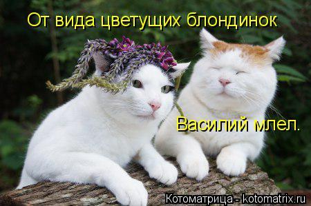 http://kotomatrix.ru/images/lolz/2014/09/29/kotomatritsa_HO.jpg