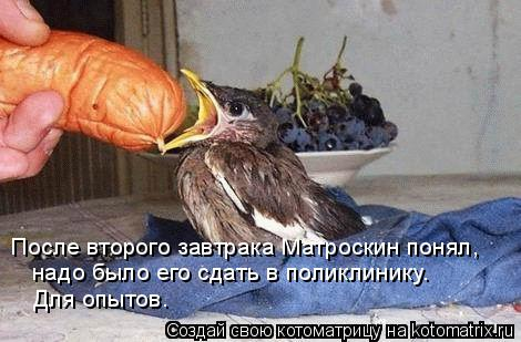 Котоматрица: После второго завтрака Матроскин понял,  надо было его сдать в поликлинику.  Для опытов.