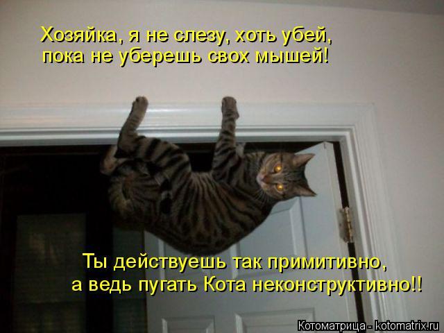 Котоматрица: Хозяйка, я не слезу, хоть убей, пока не уберешь свох мышей! Ты действуешь так примитивно, а ведь пугать Кота неконструктивно!!