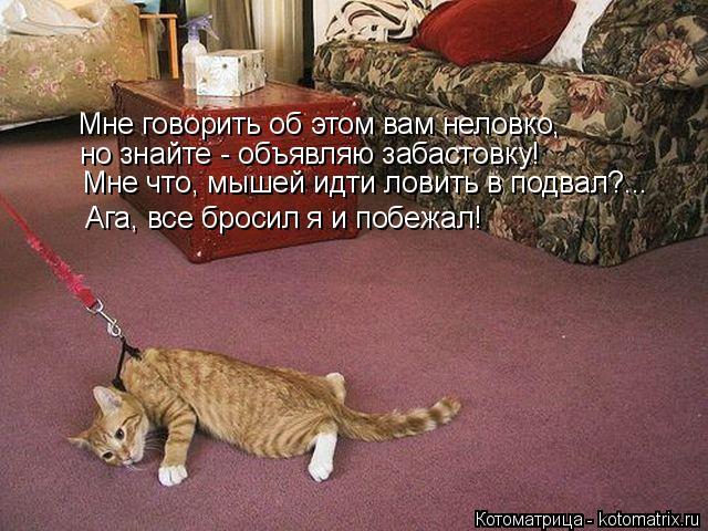 Котоматрица: Мне говорить об этом вам неловко, но знайте - объявляю забастовку! Мне что, мышей идти ловить в подвал?... Ага, все бросил я и побежал!