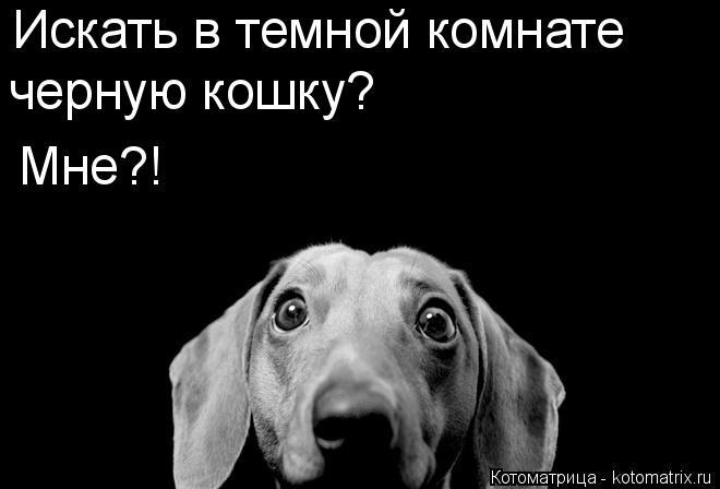 Котоматрица: Искать в темной комнате черную кошку? Мне?!
