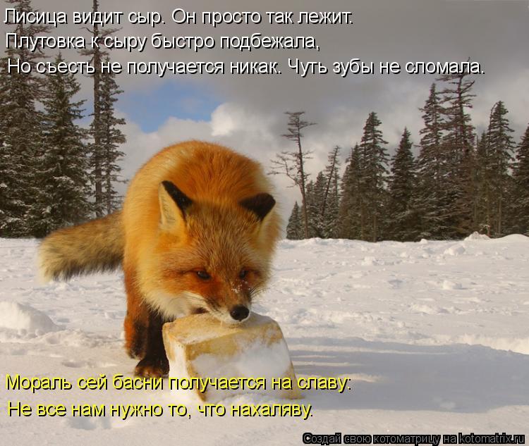 Котоматрица: Лисица видит сыр. Он просто так лежит. Плутовка к сыру быстро подбежала, Но съесть не получается никак. Чуть зубы не сломала. Мораль сей басн