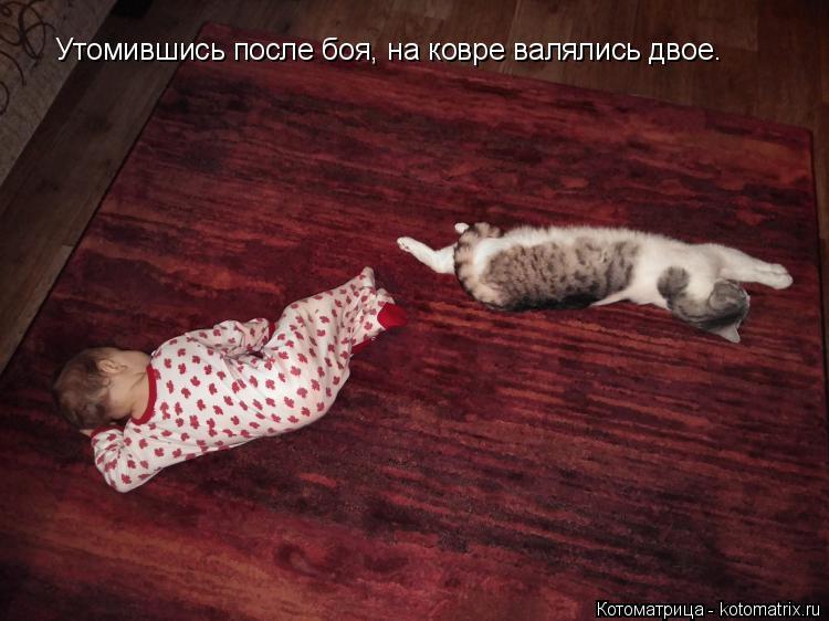 Котоматрица: Утомившись после боя, на ковре валялись двое.