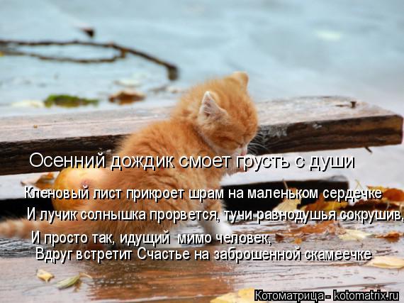 Котоматрица: Кленовый лист прикроет шрам на маленьком сердечке Осенний дождик смоет грусть с души И лучик солнышка прорвется, тучи равнодушья сокрушив,