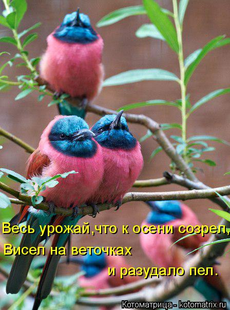 Котоматрица: Весь урожай,что к осени созрел, Висел на веточках  и разудало пел.
