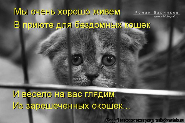 Котоматрица: Мы очень хорошо живем В приюте для бездомных кошек И весело на вас глядим Из зарешеченных окошек...