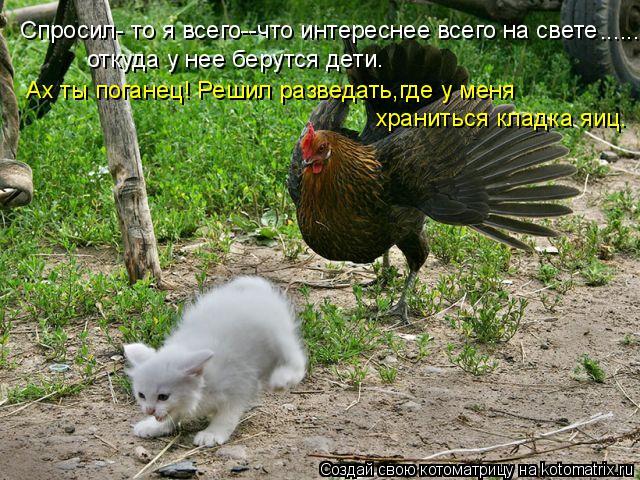 Котоматрица: Спросил- то я всего--что интереснее всего на свете откуда у нее берутся дети. Ах ты поганец! Решил разведать,где у меня  храниться кладка яиц.