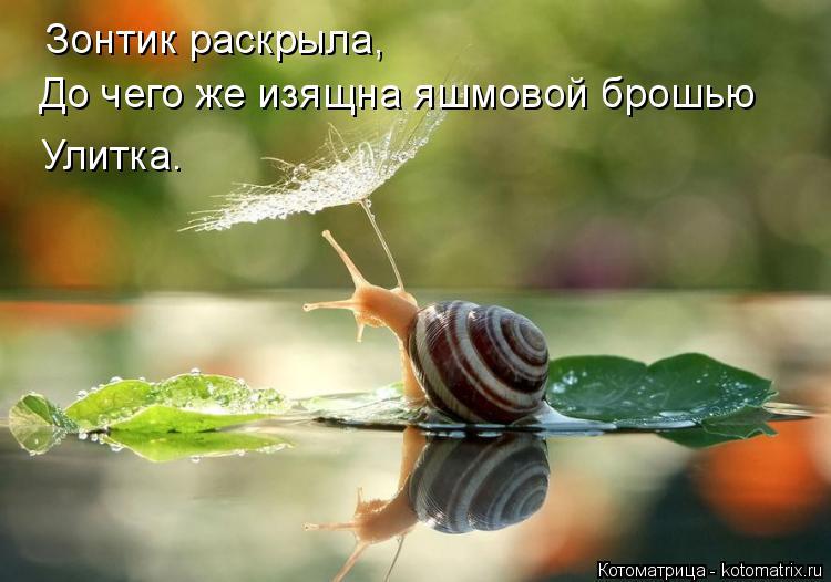 Котоматрица: Зонтик раскрыла, До чего же изящна яшмовой брошью Улитка.