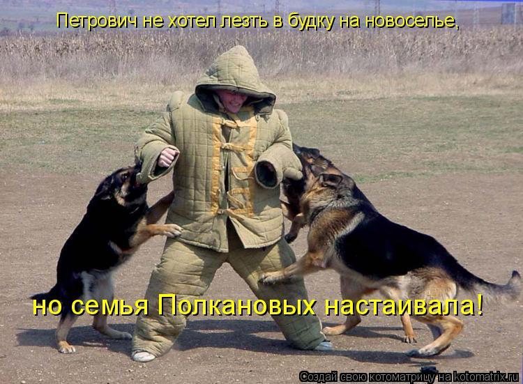 Котоматрица: Петрович не хотел лезть в будку на новоселье, но семья Полкановых настаивала!
