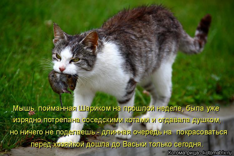 Котоматрица: Мышь, пойманная Шариком на прошлой неделе, была уже изрядно потрепана соседскими котами и отдавала душком, но ничего не поделаешь - длинная