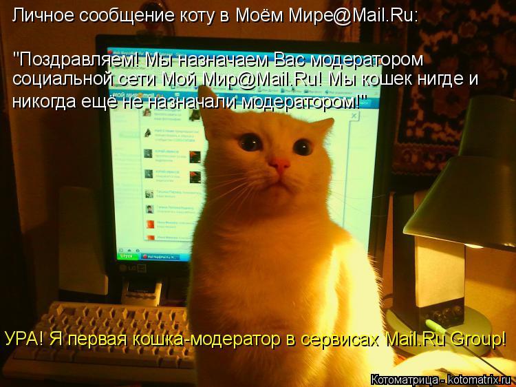 """Котоматрица: Личное сообщение коту в Моём Мире@Mail.Ru: """"Поздравляем! Мы назначаем Вас модератором социальной сети Мой Мир@Mail.Ru! Мы кошек нигде и никогда ещё"""