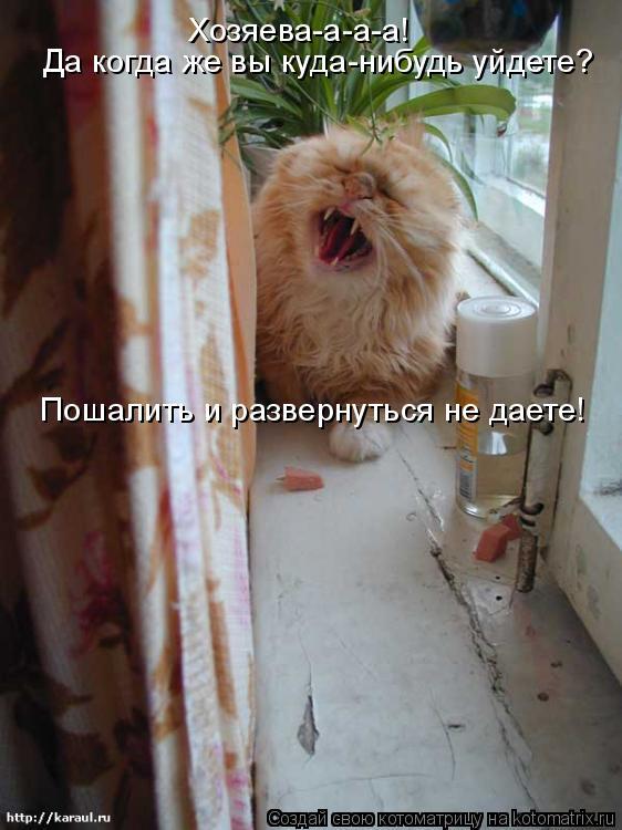 Котоматрица: Пошалить и развернуться не даете! Хозяева-а-а-а! Да когда же вы куда-нибудь уйдете?