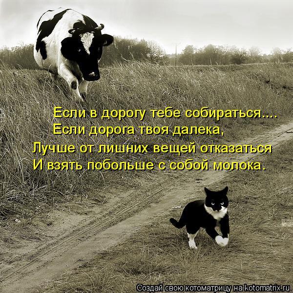 Котоматрица: Если в дорогу тебе собираться.... Лучше от лишних вещей отказаться И взять побольше с собой молока. Если дорога твоя далека,