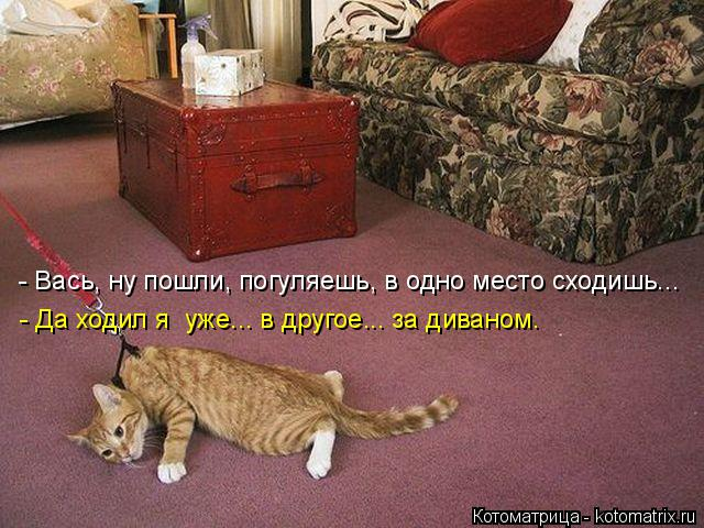 Котоматрица: - Да ходил я  уже... в другое... за диваном. - Вась, ну пошли, погуляешь, в одно место сходишь...